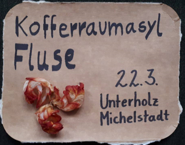 Kofferraumasyl & Fluse LIVE am 22.03.19